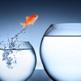 Fish jumping from one small bowl to a large bowl to represent change
